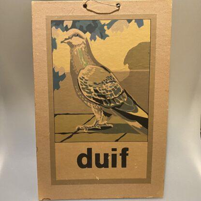 schoolplaat duif